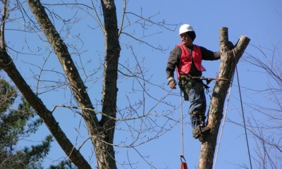 tree-removal-melbourne