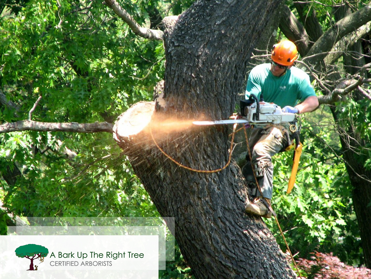 Tree and Stump Removal Service