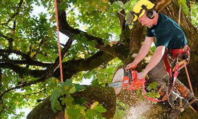 Tree Lopping Adelaide