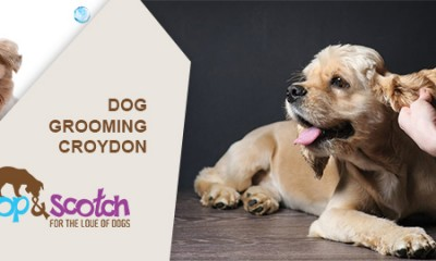 Dog Grooming Boronia