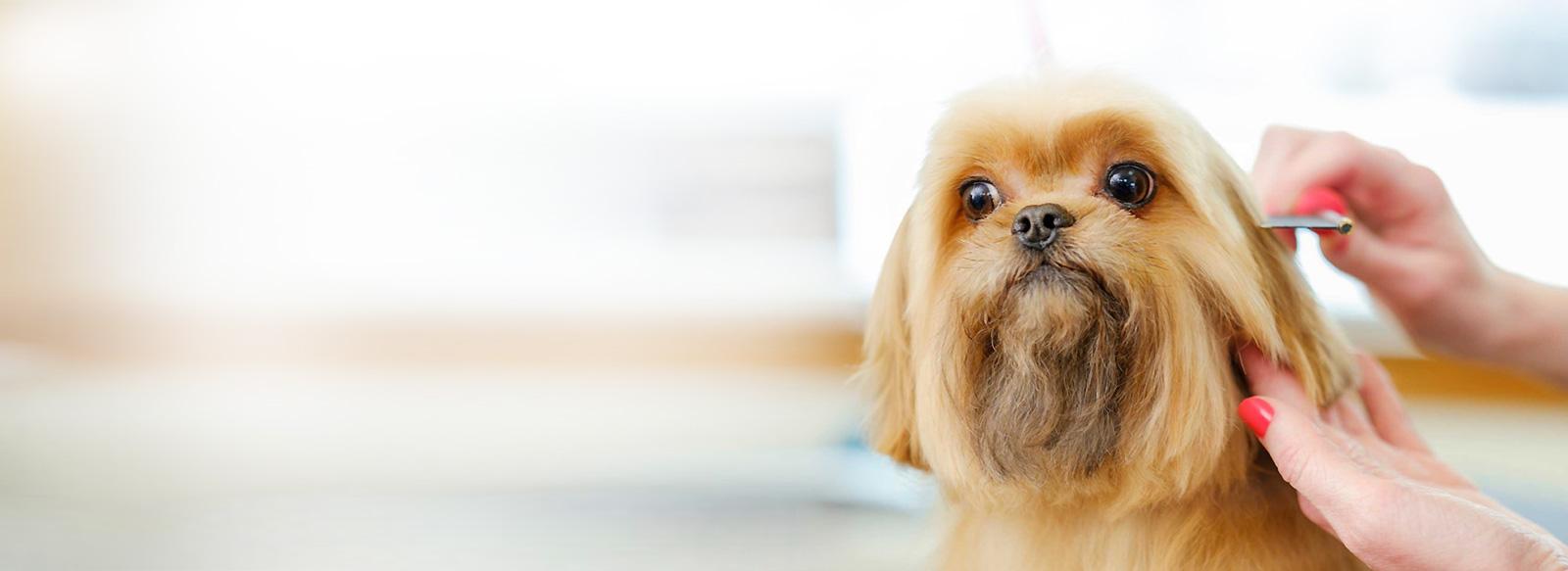 Dog Grooming Croydon