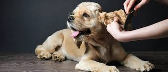 Dog Grooming Melbourne