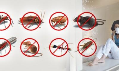 pest control adelaide companies