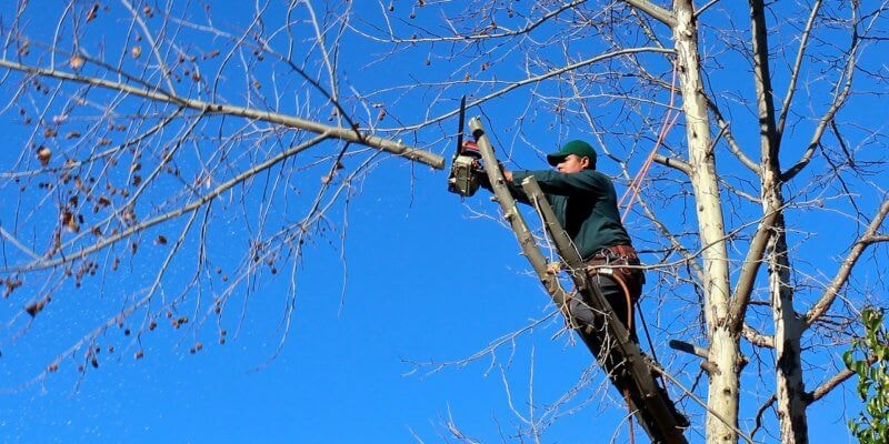 tree removal services melbourne